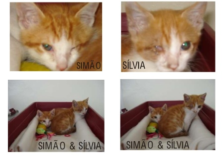 Simão&Sílvia