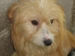 Alan - cão adulto, meigo, porte médio.