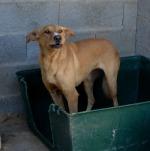 Boneca - cadela com cerca de 3 anos, meiga, esterilizada.