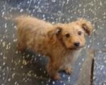 Cão com cerca de 3/4 meses