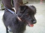 Jet - cão com 7 meses, porte pequeno, meigo, castrado.