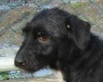 Linda - cadela jovem, meiga, porte médio/pequeno, esterilizada.
