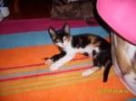 Ritinha, cerca de 3 meses, com saúde. Contacto: rita.mauricio@gmail.com ou 963736643